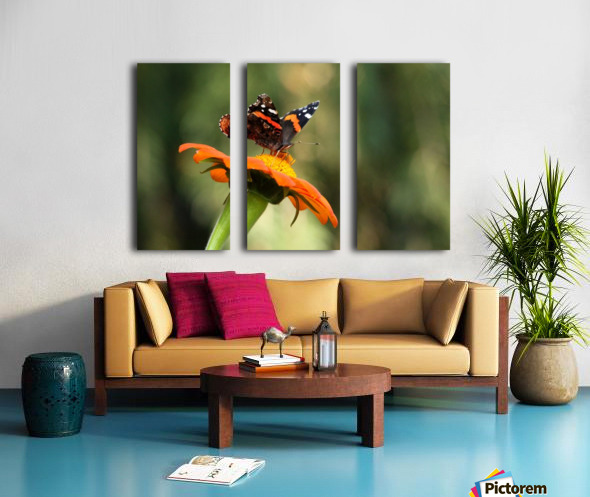 Mexican Sunflower With Red Admiral Split Canvas print