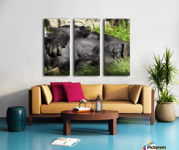 Gorilla Glare Split Canvas print