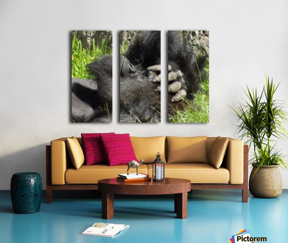 Gorilla Headache Split Canvas print