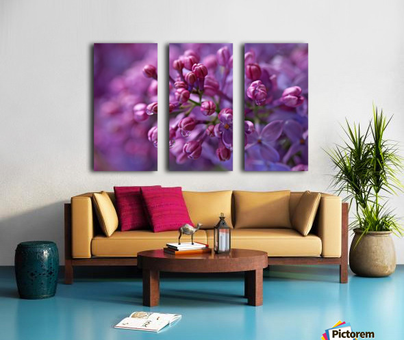 Dreamy Lilacs Split Canvas print