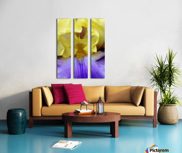 Lavender And Yellow Iris Heart Split Canvas print
