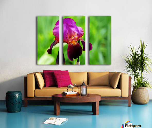 Bold And Beautiful Split Canvas print