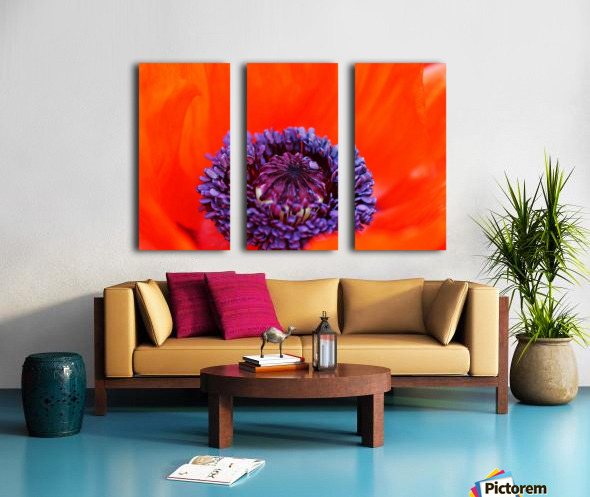 Poppy Whorl Split Canvas print