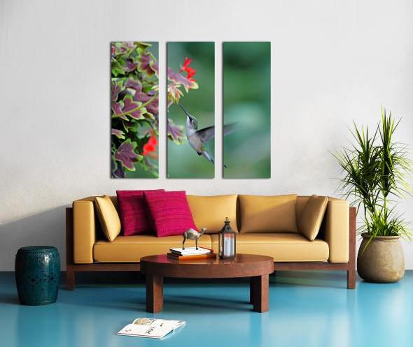 Hummingbird Loving The Orange Geranium Split Canvas print