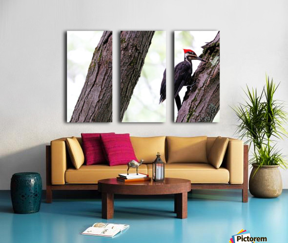 Pileated Woodpecker Checking The Cracks Split Canvas print