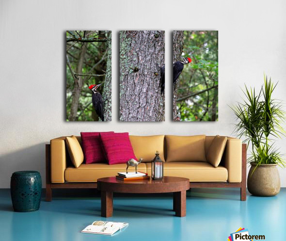 Male And Female Pileated Woodpeckers Split Canvas print