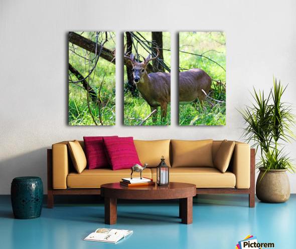 A Buck In The Grass Split Canvas print