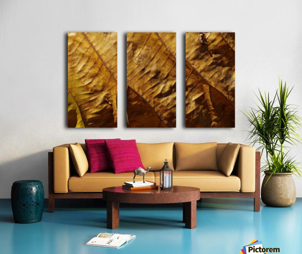 Close-up view of dried leaf Split Canvas print