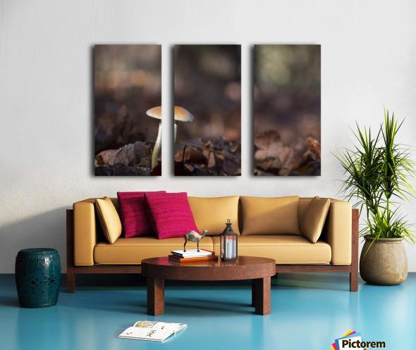 Mushrooms Split Canvas print