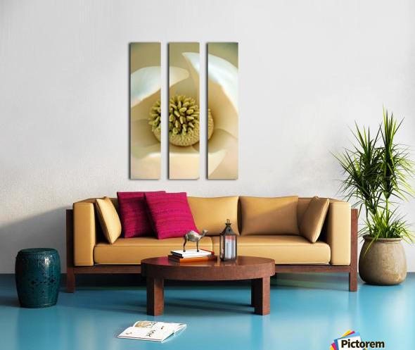 Heart of the Magnolia Split Canvas print