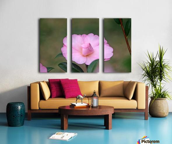 Pink Camellia Split Canvas print