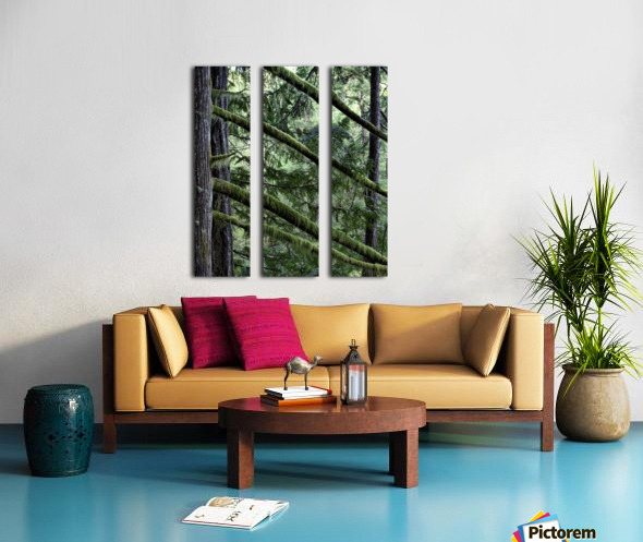 Rainforest Split Canvas print