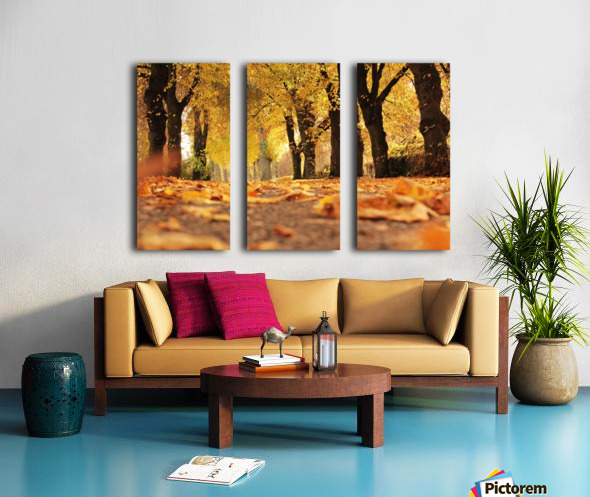Beautiful Nature Landscape Tree Forest Trees Photography landscape photo Scenery Split Canvas print