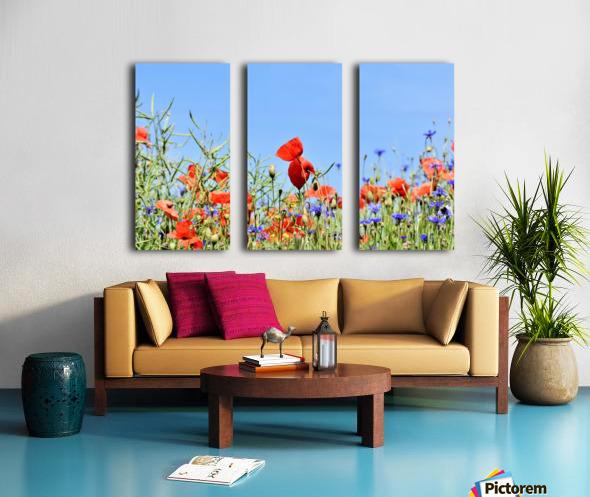 poppy, alpine cornflower, centaurea montana, flower, flower meadow, blossom, bloom, flora, plant, wild flower, garden, meadow, nature, field, petals, leaves, stems, Split Canvas print
