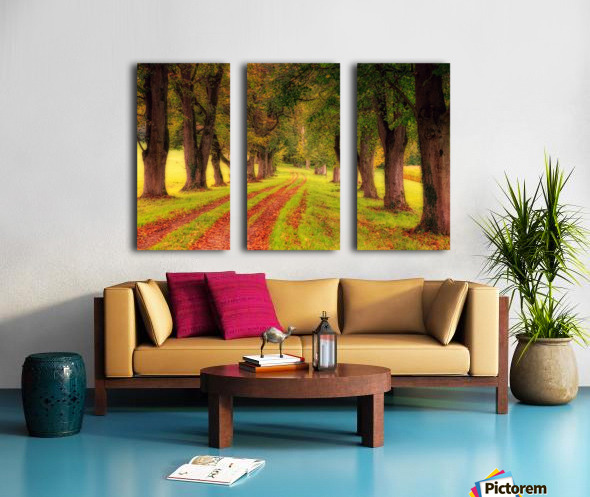 tree, avenue, nature, landscape, tree lined avenue, away, distance, trail, autumn, leaves, forest, green, mood, green leaves, lane, path, Split Canvas print