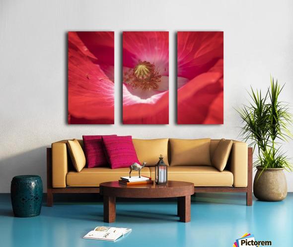 Poppy Flower Split Canvas print