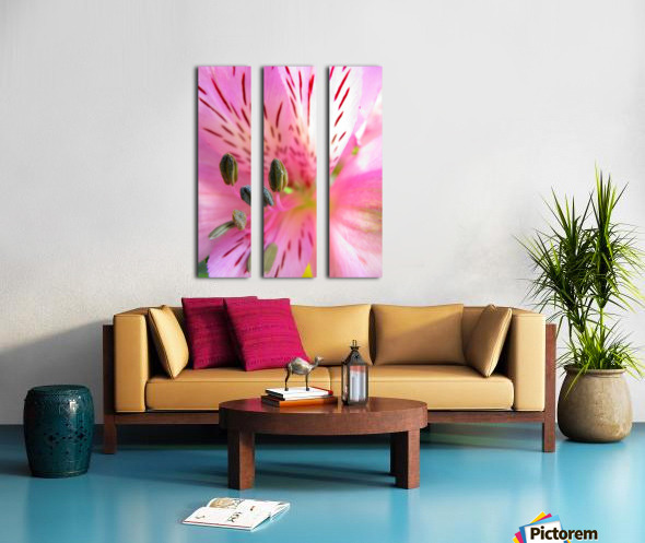 Gentle Pink Split Canvas print