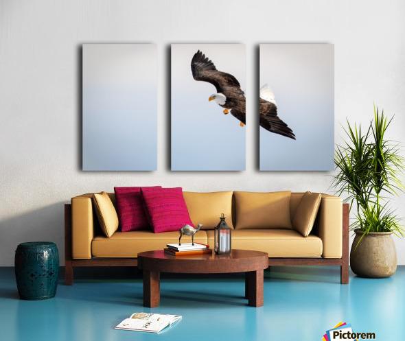 Mature Bald Eagle aiming for prey. Split Canvas print