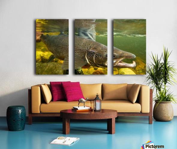 Atlantic salmon Male.  Split Canvas print