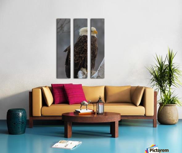 Bald eagle in tree Split Canvas print