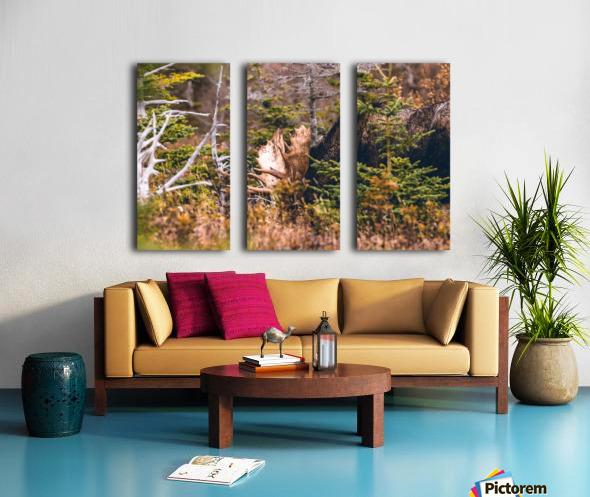 Bull Moose Split Canvas print