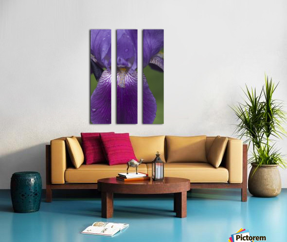 Purple Bearded Iris 3 Split Canvas print