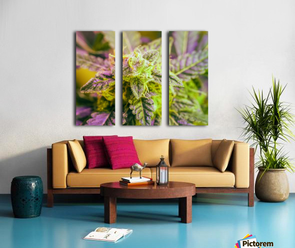 Green and Purple Split Canvas print