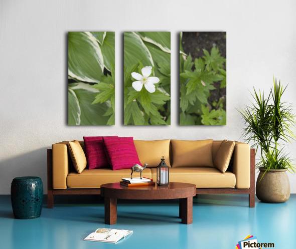 Wood Anenome Split Canvas print