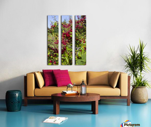 Sumac Bush in Autumn 2 Split Canvas print