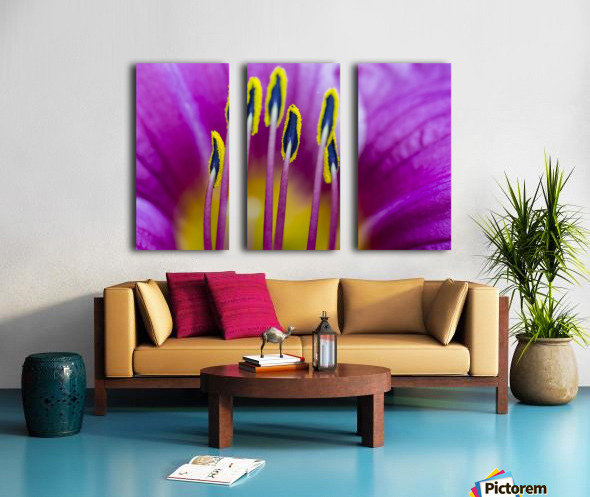 Macro of Purple Day Lily Stamen Split Canvas print