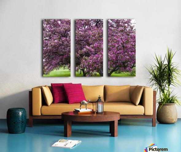 Blooming Crab Apple Trees Split Canvas print