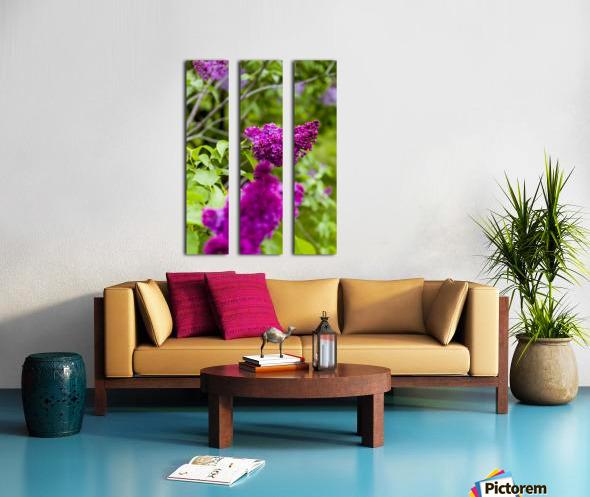 Purple Lilac Blossoms 2 Split Canvas print