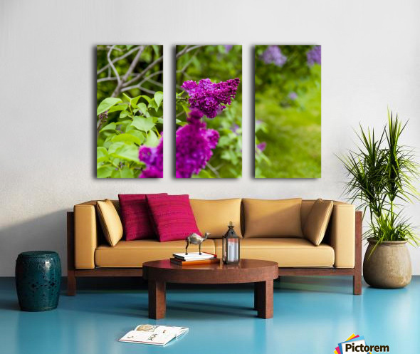 Purple Lilac Split Canvas print