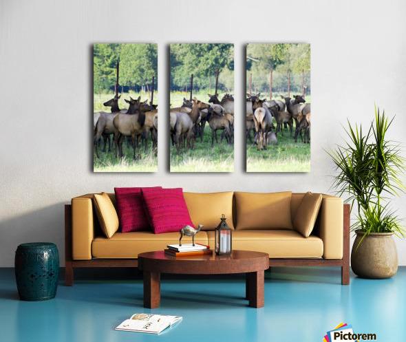 Elk Red Tailed Deer or Wapiti 16 Toile Multi-Panneaux