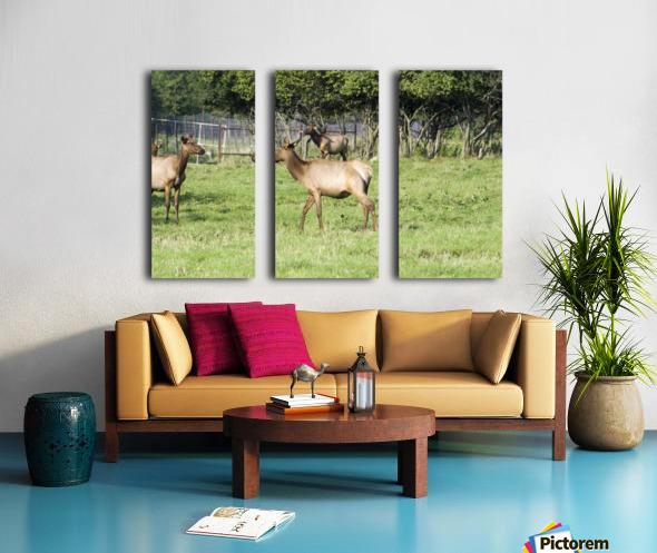 Elk Red Tailed Deer or Wapiti 4 Split Canvas print