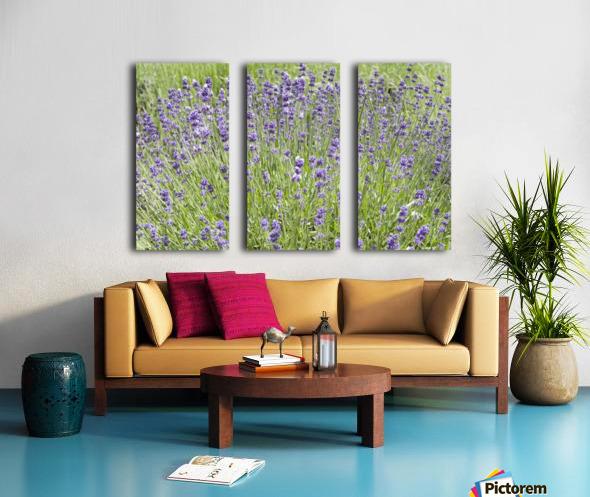 Lavender plants 7 Split Canvas print