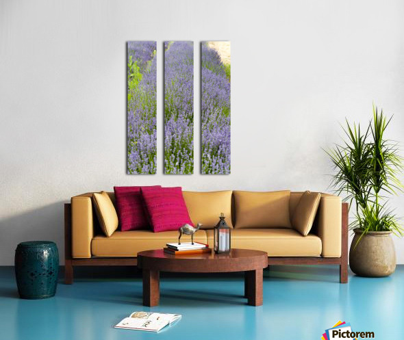 Lavender plants 7 Split Canvas print