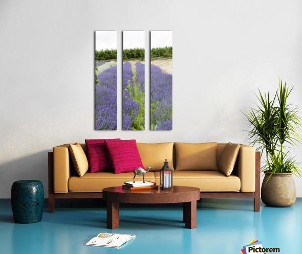 Lavender plants and fruit trees 6 Split Canvas print
