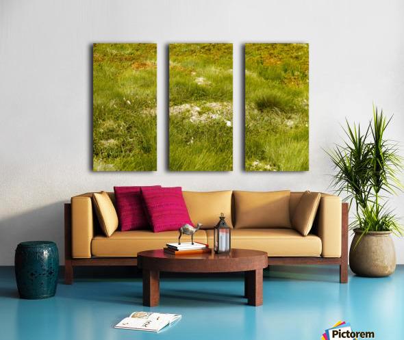 Cape Spears Flowers and vegetation 1 Split Canvas print