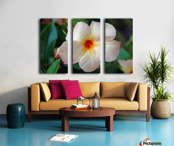 Mandevilla In Apricot Split Canvas print