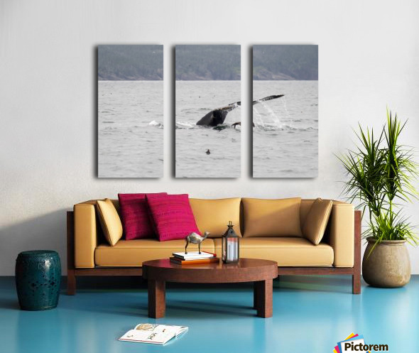Humback whale a puffin and a murre 4 Split Canvas print