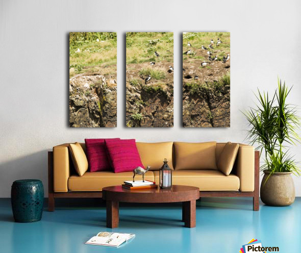 Puffins being puffins 12 Split Canvas print