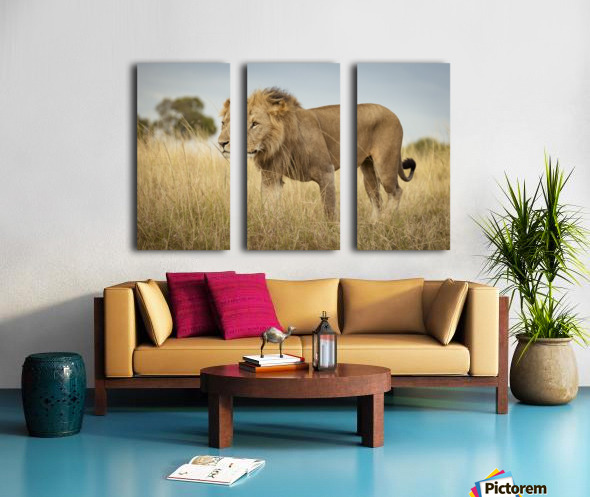 Proud King - 3 Split Canvas print
