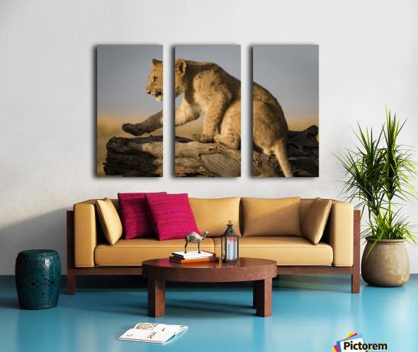 Small Step for Lionkind Split Canvas print