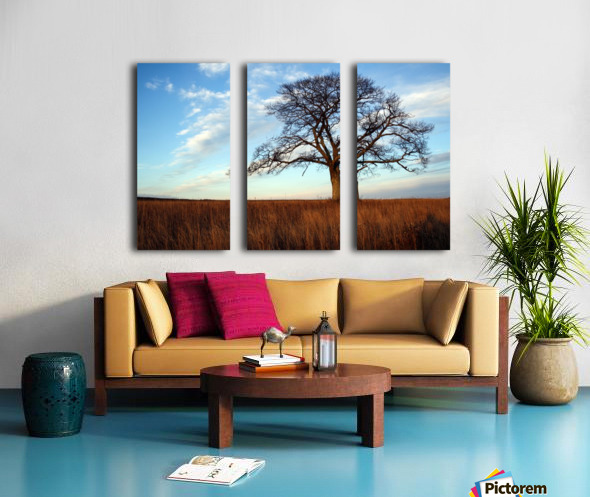 Shubenacadie Tree Split Canvas print