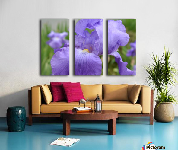 Purple Iris Photograph Split Canvas print