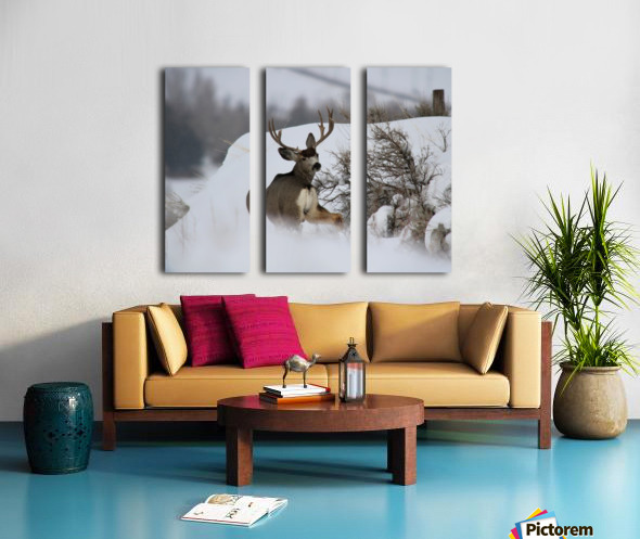 mule Split Canvas print