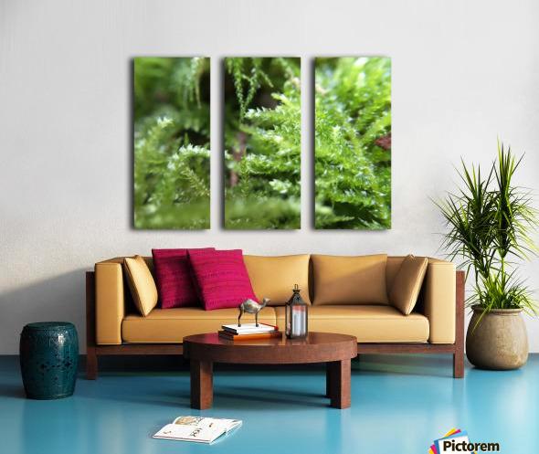 IMG_3563 Split Canvas print