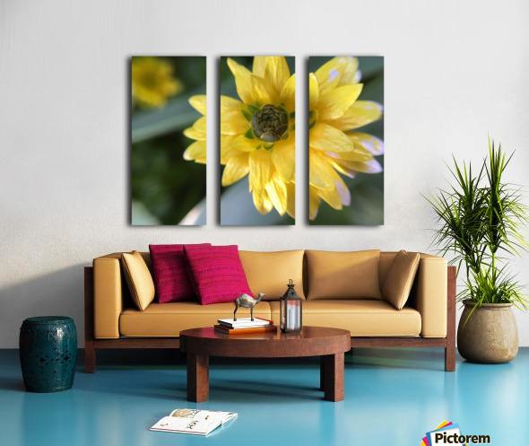 IMG_3924 Split Canvas print