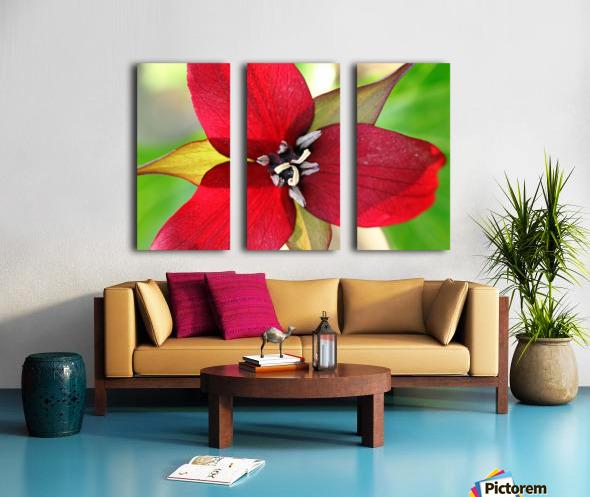 Dark Red Trillium Split Canvas print